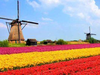 Netherlands Online Gambling